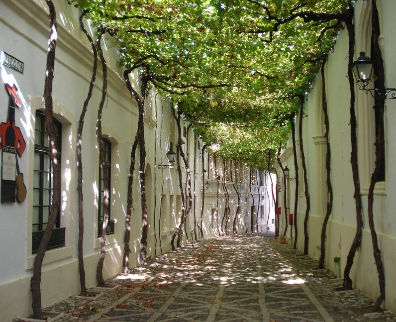 A tree lined street in Spain