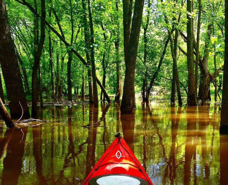 Kayaking in a forest