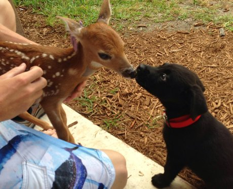 fawn and puppy