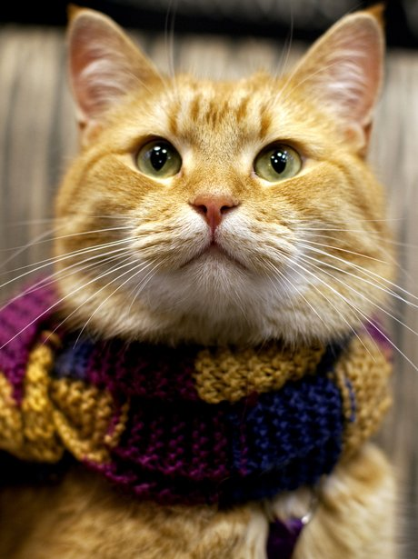 Bob The Cat wearing a scarf