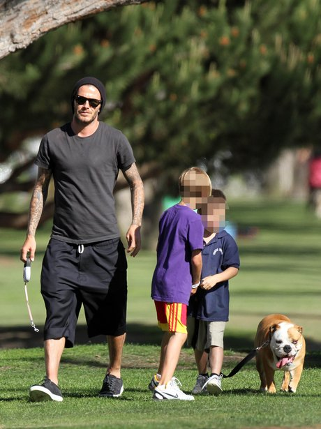 David Beckham walking his dog in California