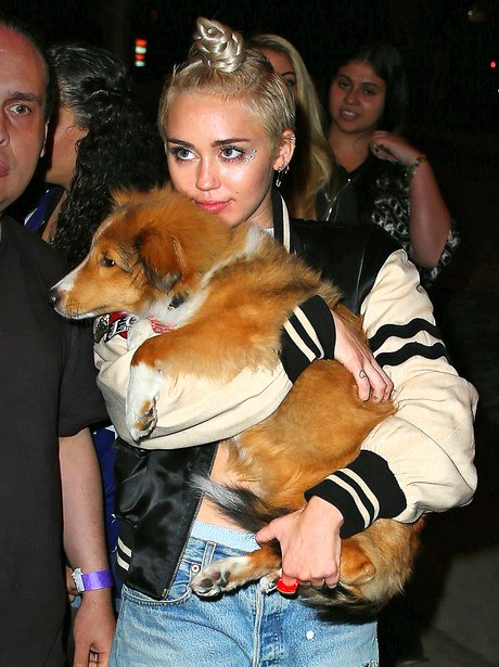 Miley Cyrus carrying her pet pooch