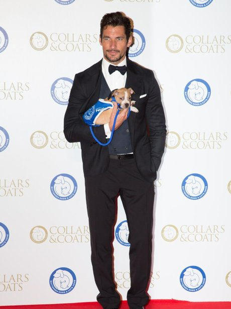 David Gandy Battersea Dogs' Collars & Coats Gala B