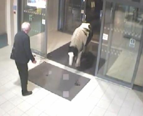 Pony walks into police station