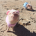 Image 1: Small pigs