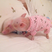 Image 8: Small pigs