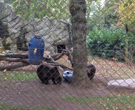 bears in cage
