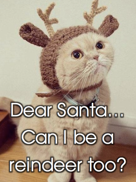 1. Cuteness Alert! This adorable Christmas cat ... & Aww! Adorable Pets In Christmas Costumes - Heart