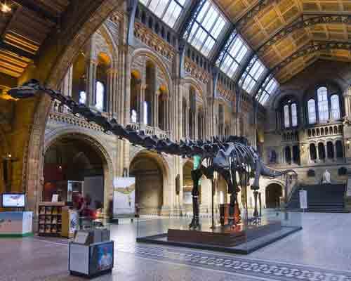 Dippy the dinosaur at the Natural History Museum