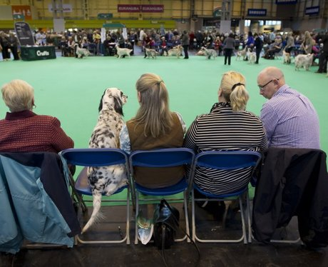 Dogs at Crufts
