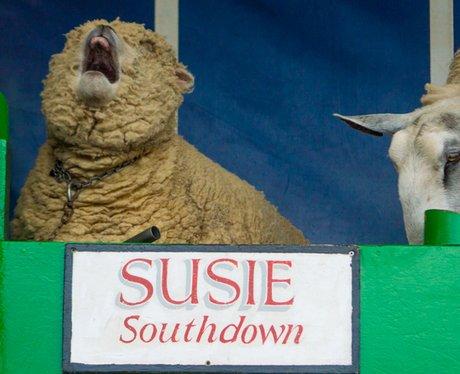Suffolk Show 2015