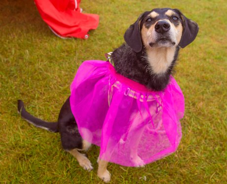 Race for Life Ipswich 2015 - Dashing Dogs