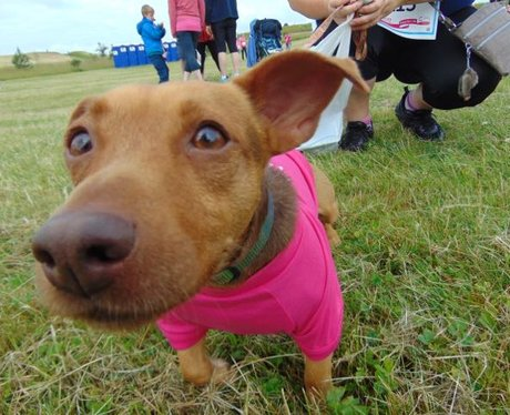 Race For Life Llanelli 2015: Part 1