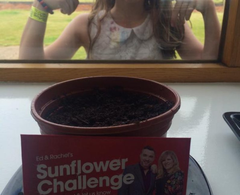 Sunflower in pot with child outside