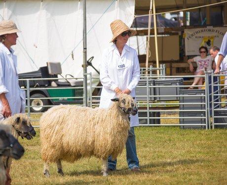 Norfolk Show 2015