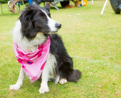 Race for Life Bury St Edmunds 2015 - Dashing Dogs