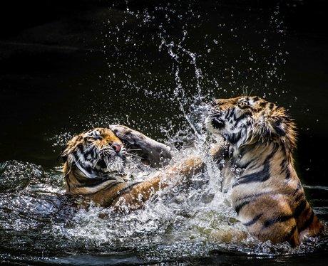 Amazing photos of nature