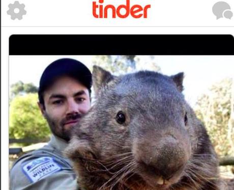 Wombat on Tinder