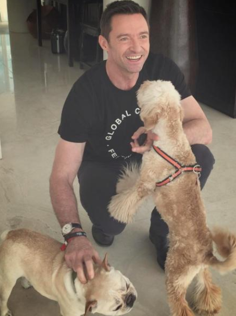 Hugh Jackman and his dogs