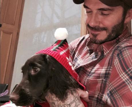 David Beckham and Olive the dog