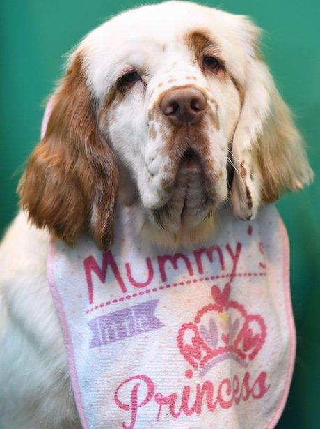 Dog Mummy's Princess