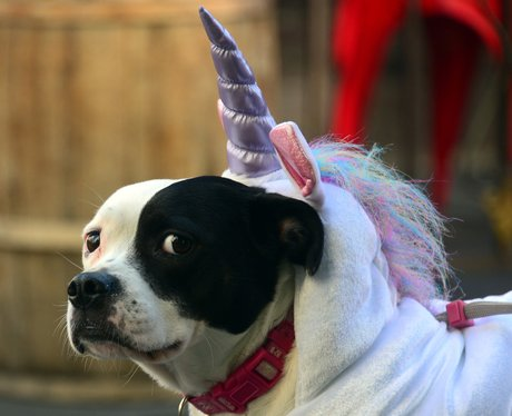 Dog with unicorn horn