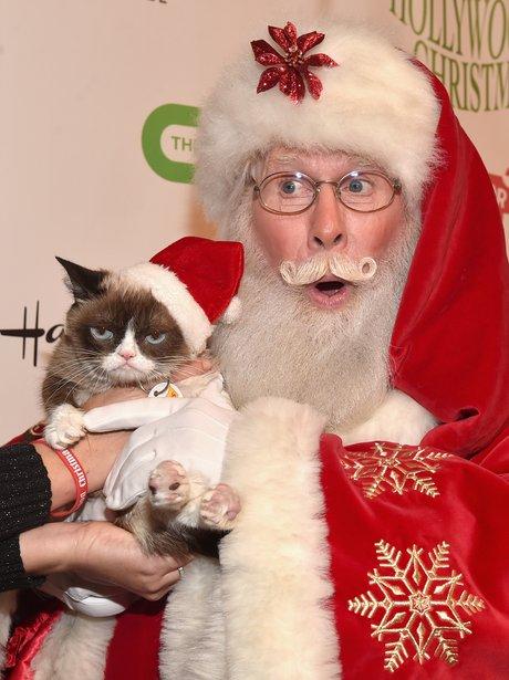 Grumpy cat with santa claus