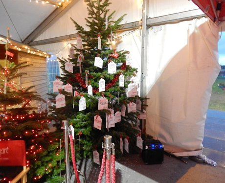 Rain fords Christmas Trees