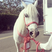 Image 3: Lady Gaga Horse