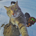 Image 3: cat taking a selfie