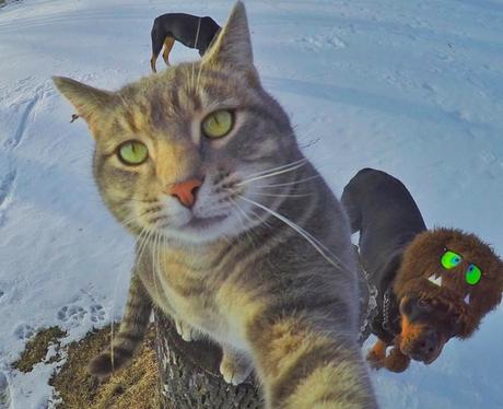 cat taking a selfie