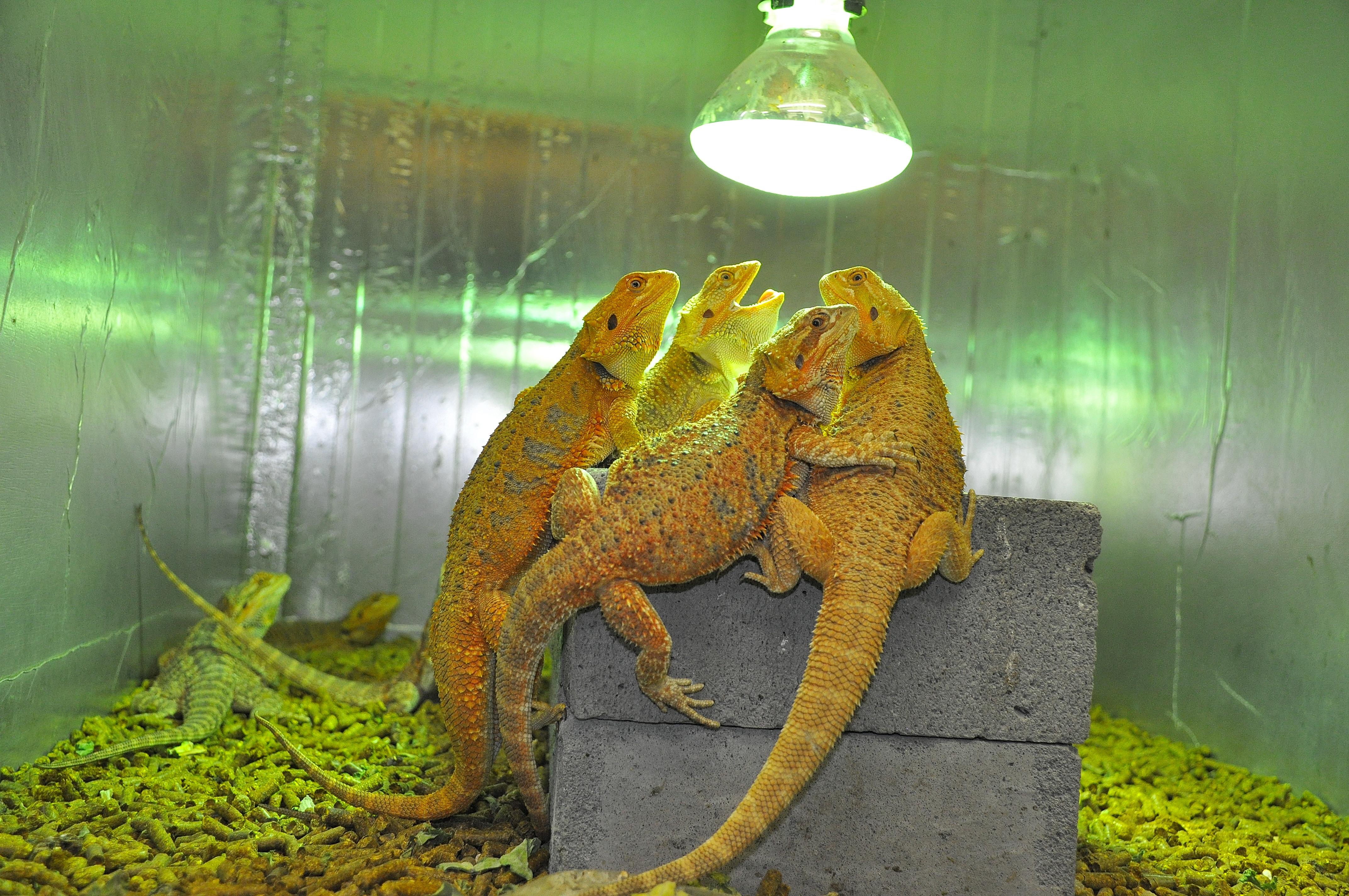 Mepal Reptile Farm