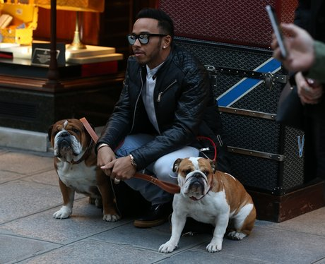 Lewis Hamilton walking his dogs