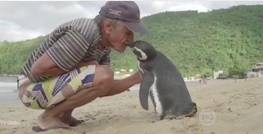 man and penguin on beach