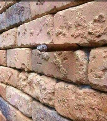 Brick wall cigar optical illusion
