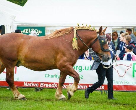 Royal Norfolk Show 2016