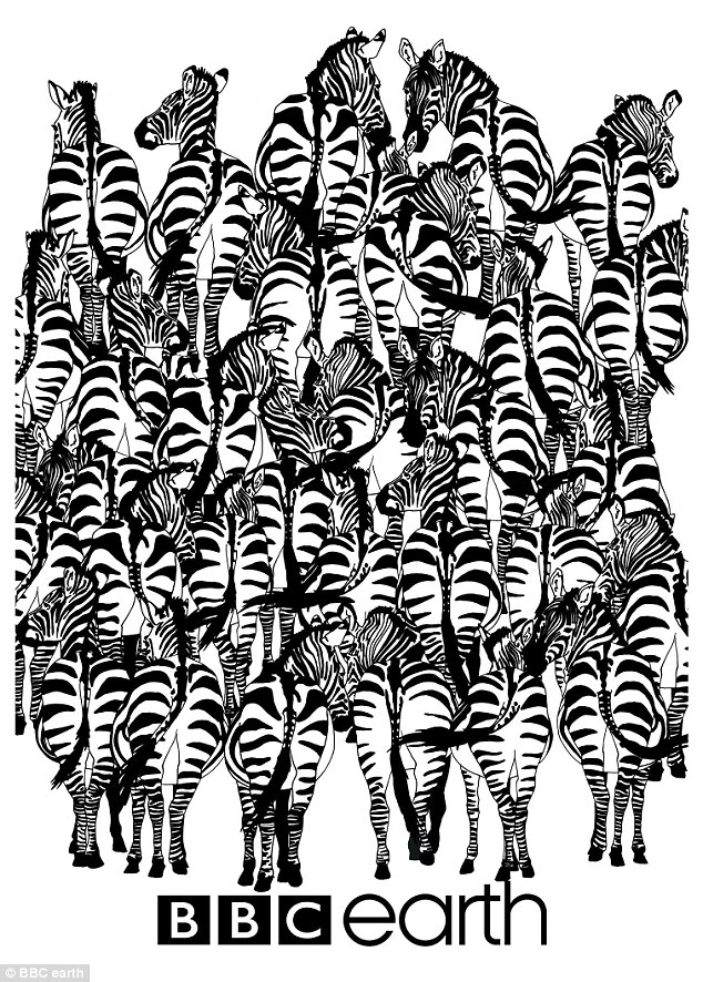 zebra optical illusion