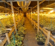 Drakelow Tunnels cannabis farm