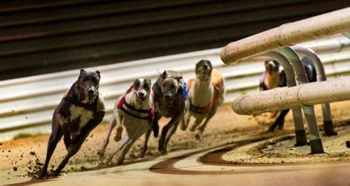 Peterborough dog racing betting matched betting what if spreadsheet