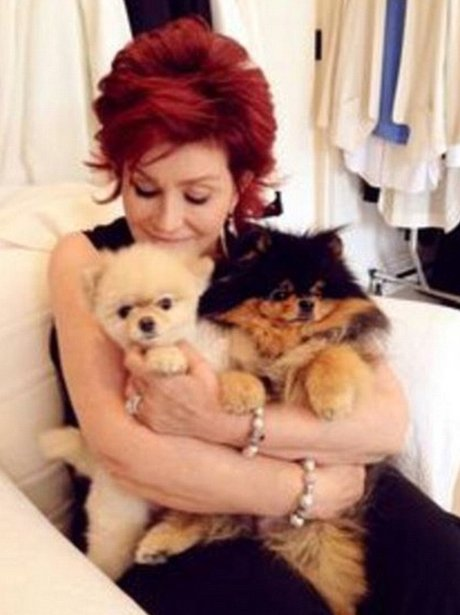 Sharon Osbourne and her dogs