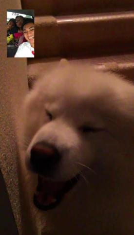 Dog gets excited when facetiming owner 2