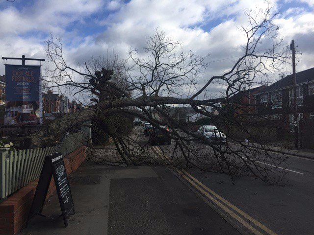 Tree down near Gloucester pub by Ben Falconer