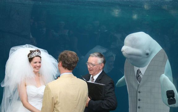 Beluga Best Man