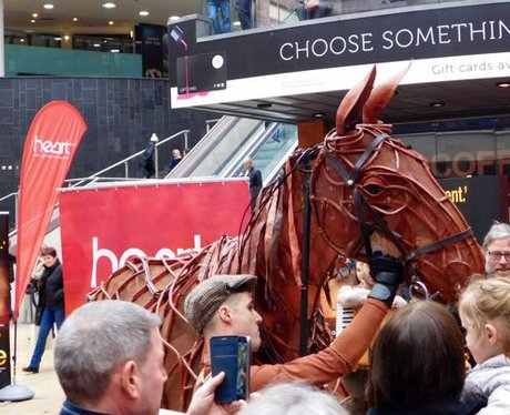 Heart Angels: Meet Joey the Warhorse (16.03.17)