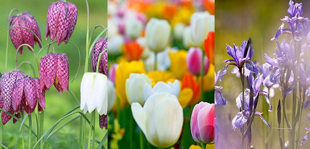 Spring has sprung and here are the pretty flowers you will see spring flowers canvas mightylinksfo