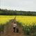 Image 2: Follow The Yellow Brick Road, Harper!