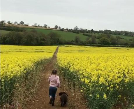 Follow The Yellow Brick Road, Harper!