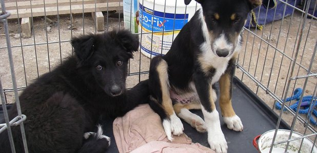Puppies abandoned yards from RSPCA rescue centre - Heart