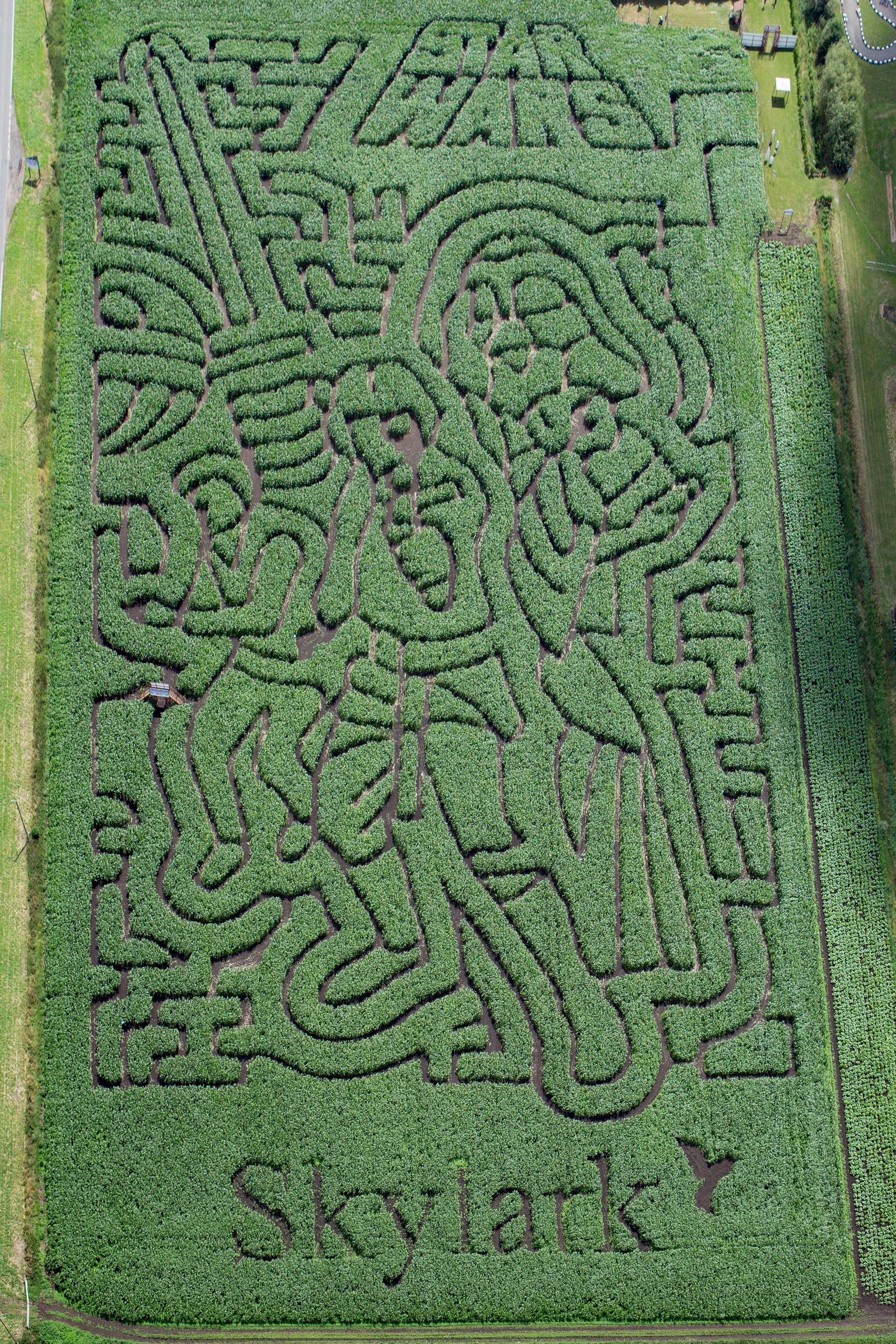 Aerial shot of Skylark Maize Maize