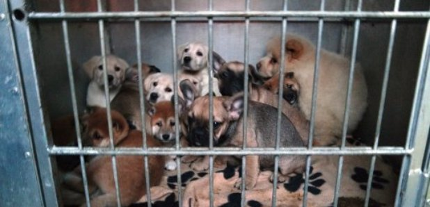 Puppy fraudsters hit in the pocket - Heart Scotland
